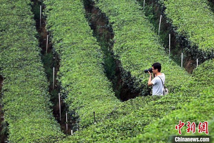 知名摄影师、书画家走进四川纳溪_感受绿色文旅发展新活力